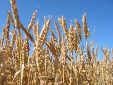 Министр сельского хозяйства посчитал, что ежегодно сельское хозяйство должно давать не менее 80 миллиардов