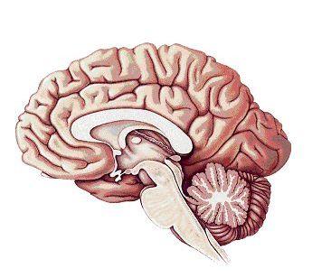 IT гигант пробует создать мозг в электронном виде